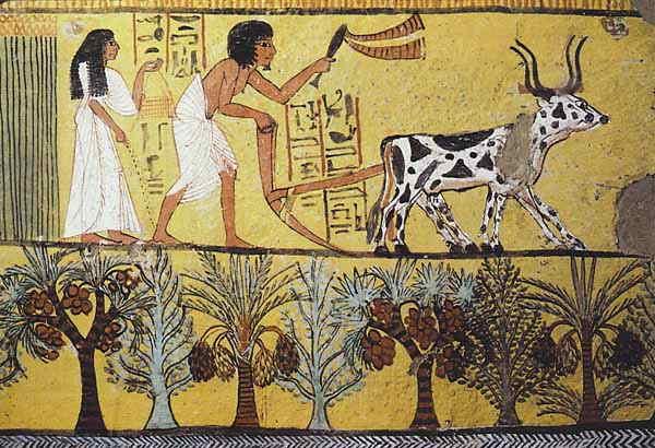 egyptfarming